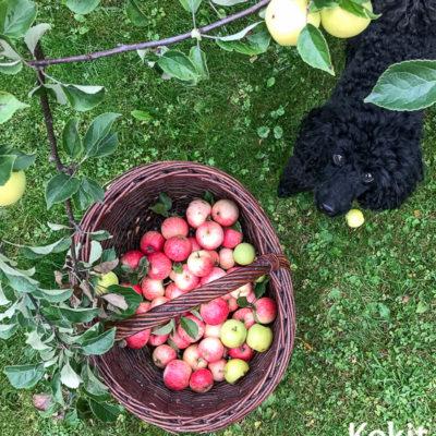 3 parasta tapaa säilöä omenat