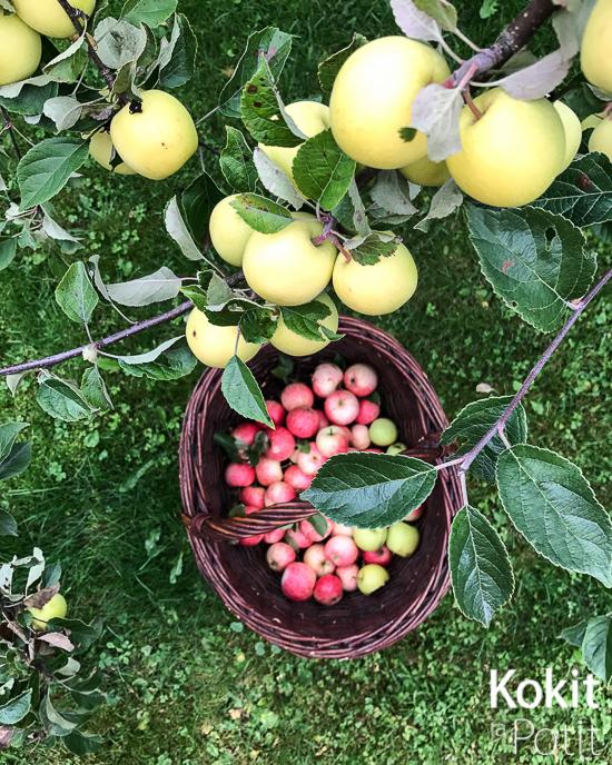 Omenoita puussa ja korissa maassa.