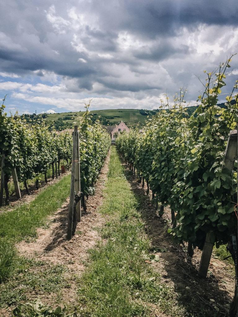 Alsace viinialue