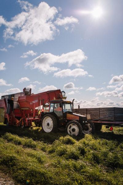 Suomalaisen ruoan päivä on 4.9. – ja jokaisena muunakin päivänä. Kuva on perunatilalta. Siinä on traktori, jonka perässä on perunannostokone. Kuvassa perunannostokonetta tyhjennetään toisen traktorin kärryssä oleviin säilytyslaatikoihin.